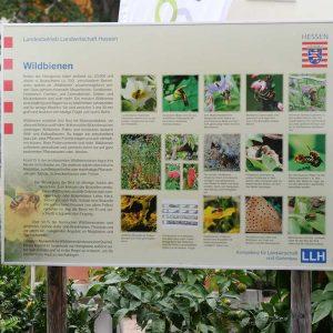 Anhand des Posters konnte die Gäste mehr über Wildbienen erfahren